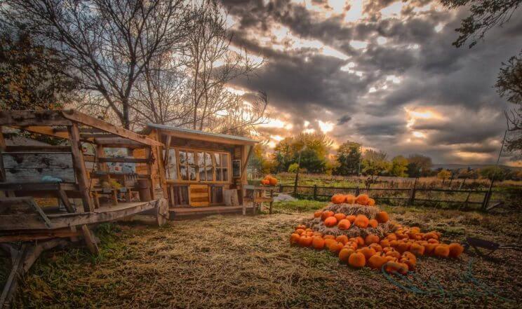 Everitt Farms | The Denver Ear