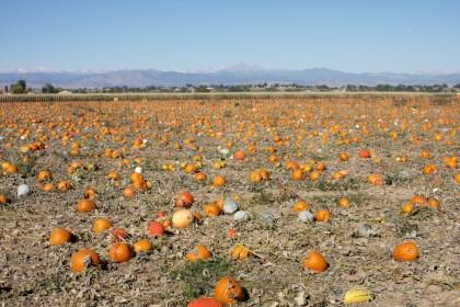 Anderson Farms Pumpkin Patch