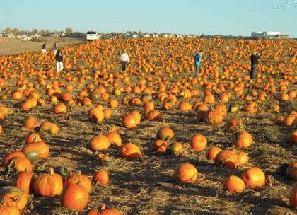 Rock Creek Farm | The Denver Ear