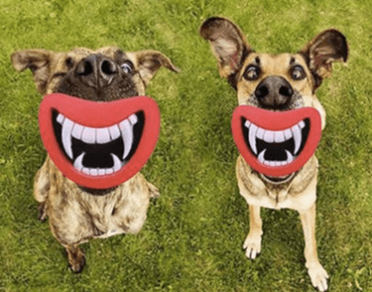 Silicon Chew Toy for Dogs