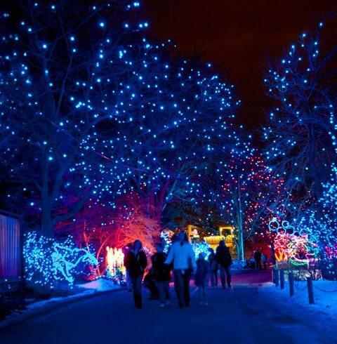 Zoo Lights | The Denver Ear