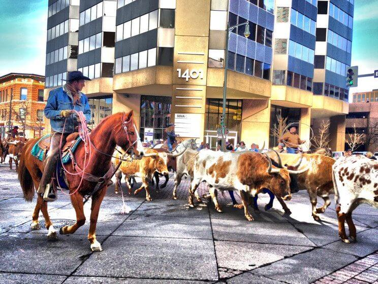 National Western Stock Show Parade | The Denver Ear