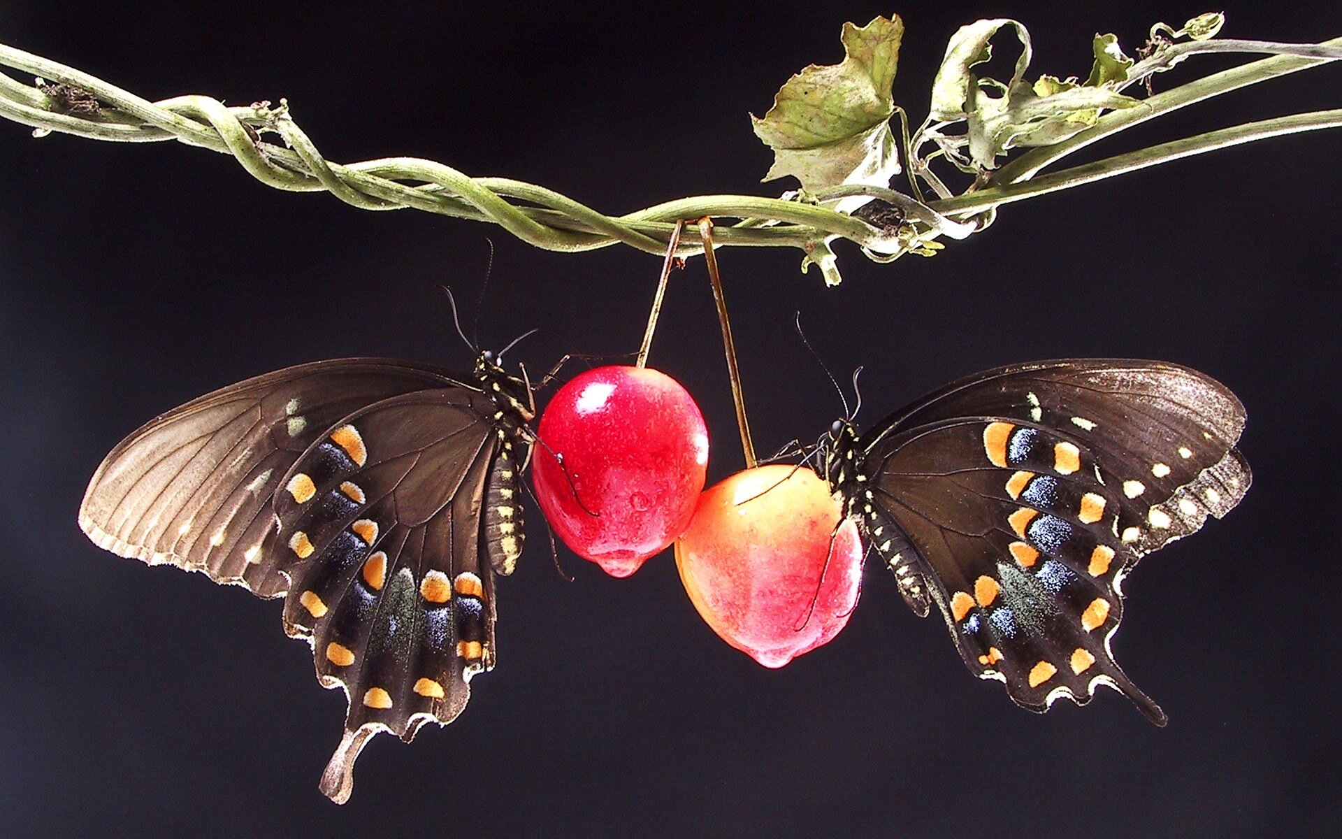 Butterfly Pavilion's Wings and Wine | The Denver Ear