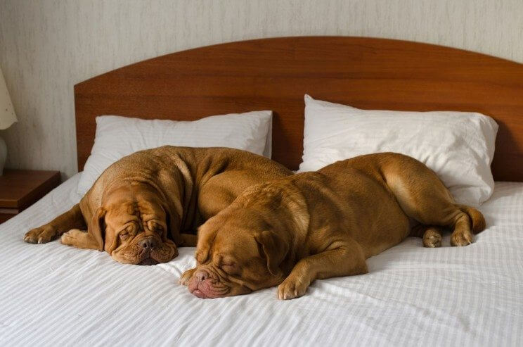 Most Dog-Friendly Hotels in Denver | The Denver Ear