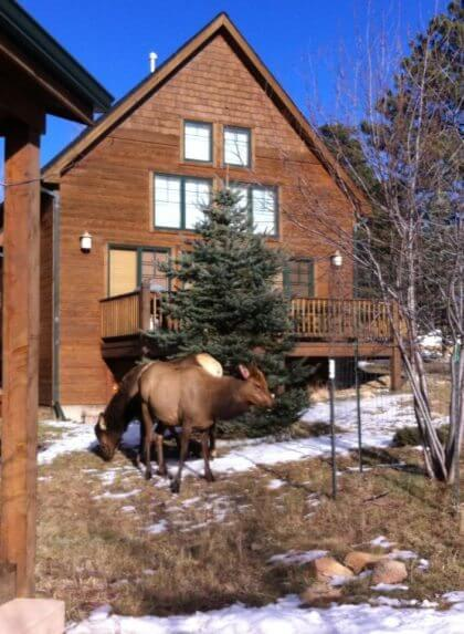 and it i on arion pin was cabins cabin first stayed pointe rentals streamside trip estes is anniversary where park our this in antlers fantastic