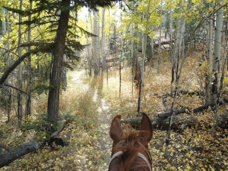 Horseback Ride through Scenic Colorado Trails | The Denver Ear