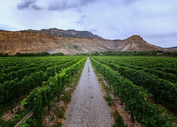 Visit Colorado's Wine Country in Grand Junction | The Denver Ear