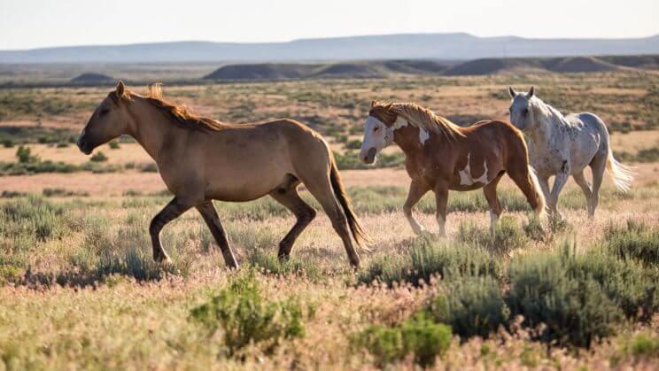 Sand Wash Basin Wild Horses | The Denver Ear