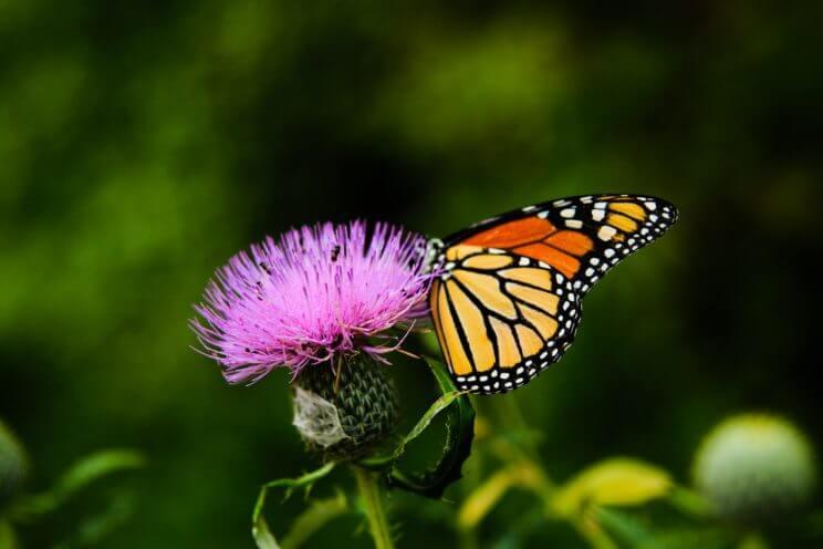 Butterfly Pavilion | The Denver Ear