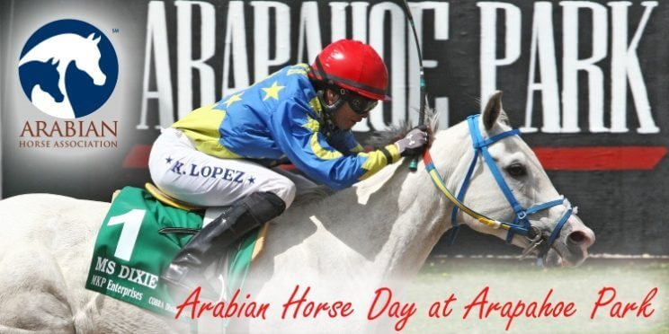 Arabian Horse Day at Arapahoe Park | The Denver Ear