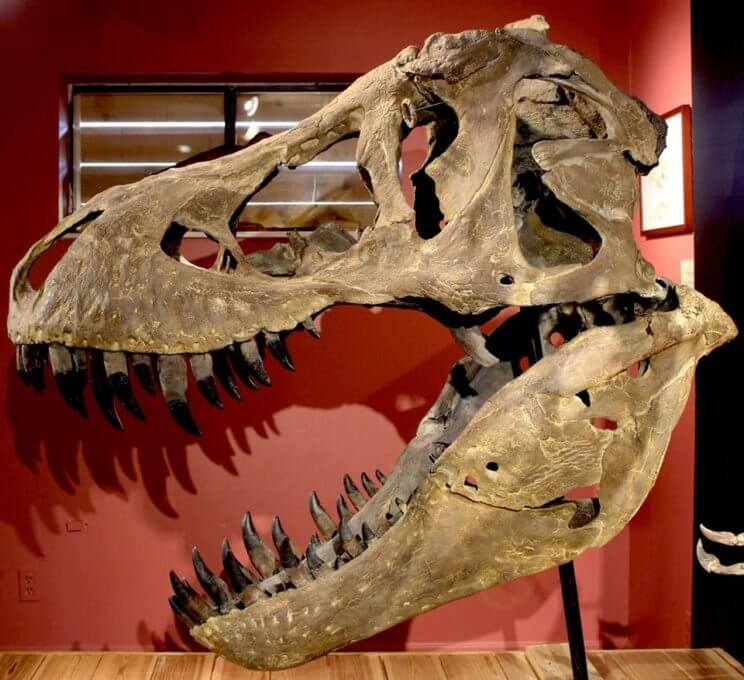 Morrison Natural History Museum | The Denver Ear