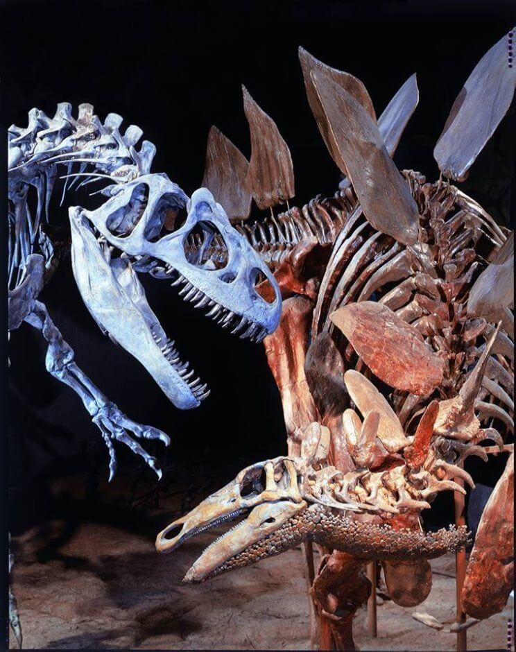 Denver Museum of Nature & Science | The Denver Ear