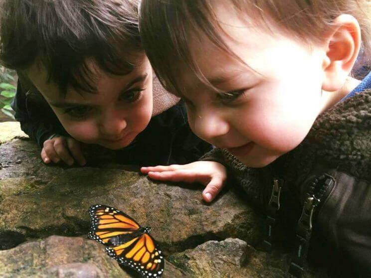 Butterfly Pavilion   The Denver Ear
