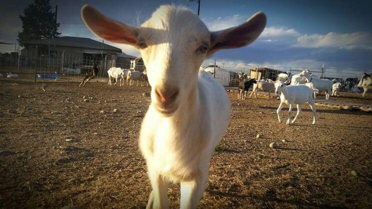 Broken Shovels Farm | The Denver Ear