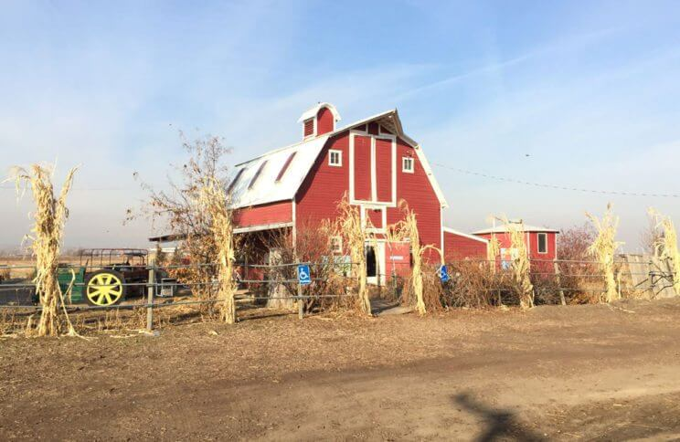 Berry Patch Farms | The Denver Ear