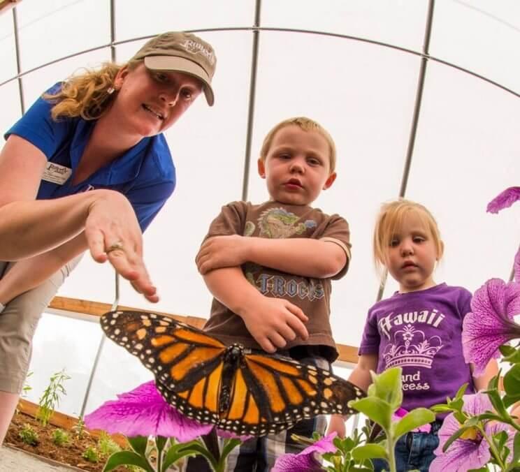 Butterflies at Chafield Closing Weekend | The Denver Ear