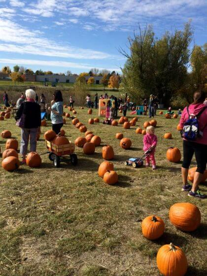 Tire Patch Cost >> Pumpkin Patches in and around Denver 2017 | The Denver Ear