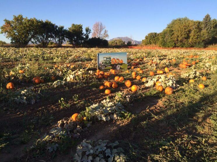 Cottonwood Farms | The Denver Ear