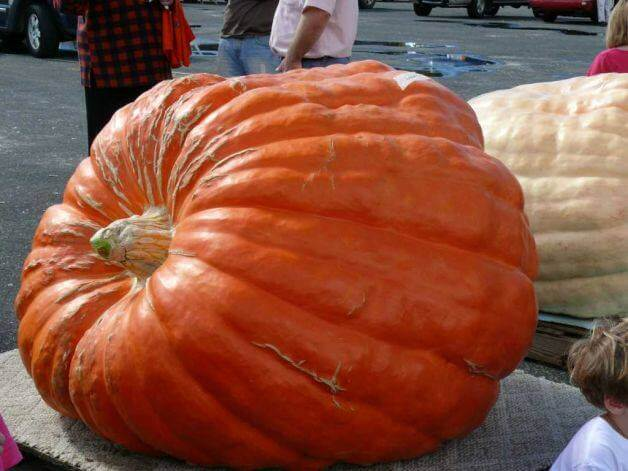 Jared's Giant Pumpkin Festival and Weigh-Off | The Denver Ear