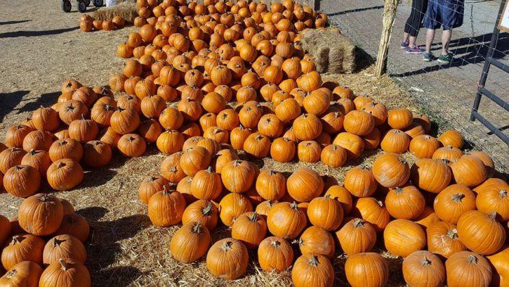 Flat Acres Farm | The Denver Ear