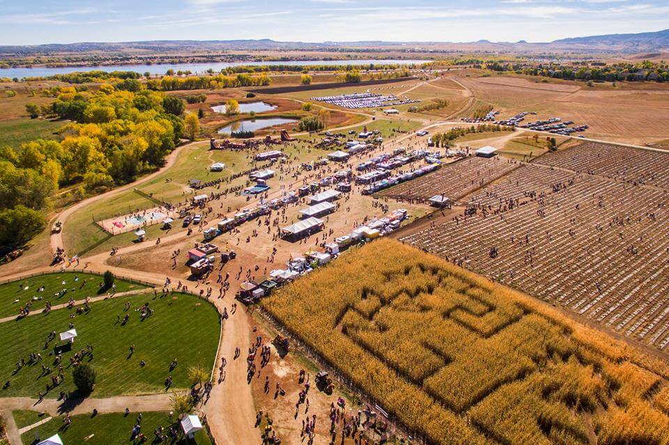 Pumpkin patches in and around denver 2018 the denver ear - Botanic gardens pumpkin festival ...