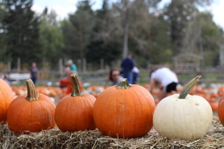 Four Mile Historic Park Pumpkin Harvest Festival | The Denver Ear