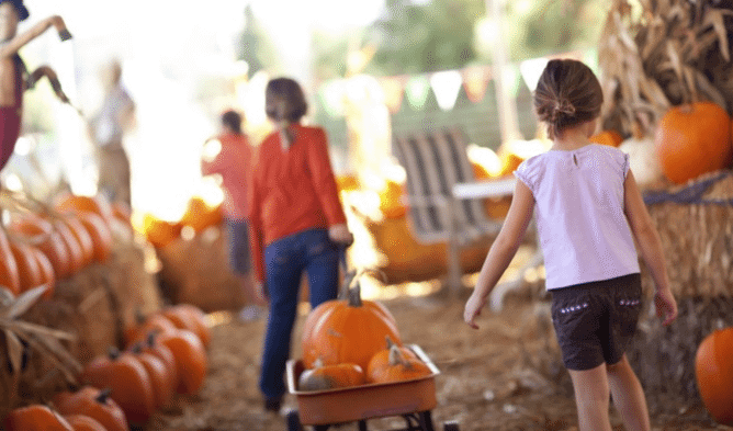 Harvest Farm Fall Festival & Corn Maize | The Denver Ear