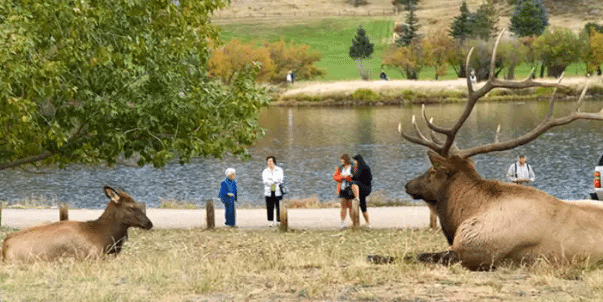 Elk Fest | The Denver Ear