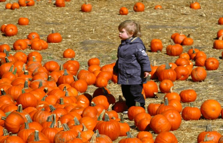 Colorado Pumpkin Patch | The Denv