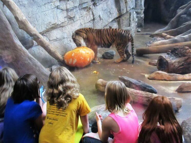 Halloween Kids Fest | Downtown Aquarium Denver | The Denver Ear