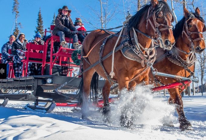 Enjoy a Horse Drawn Sleigh Ride | The Denver Ear