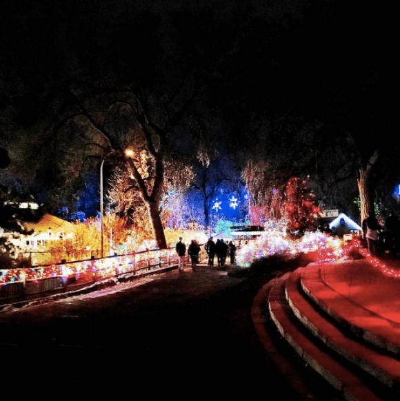 Zoo Lights | Denver Zoo | The Denver Ear