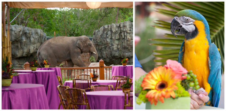 Denver Zoo Wedding | The Denver Ear