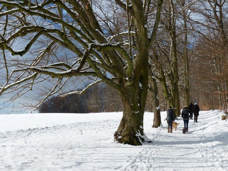 Winter Hike   The Denver Ear