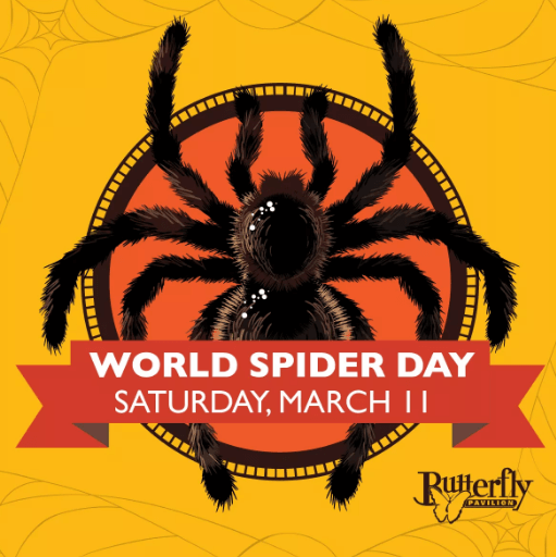 World Spider Day | The Denver Ear