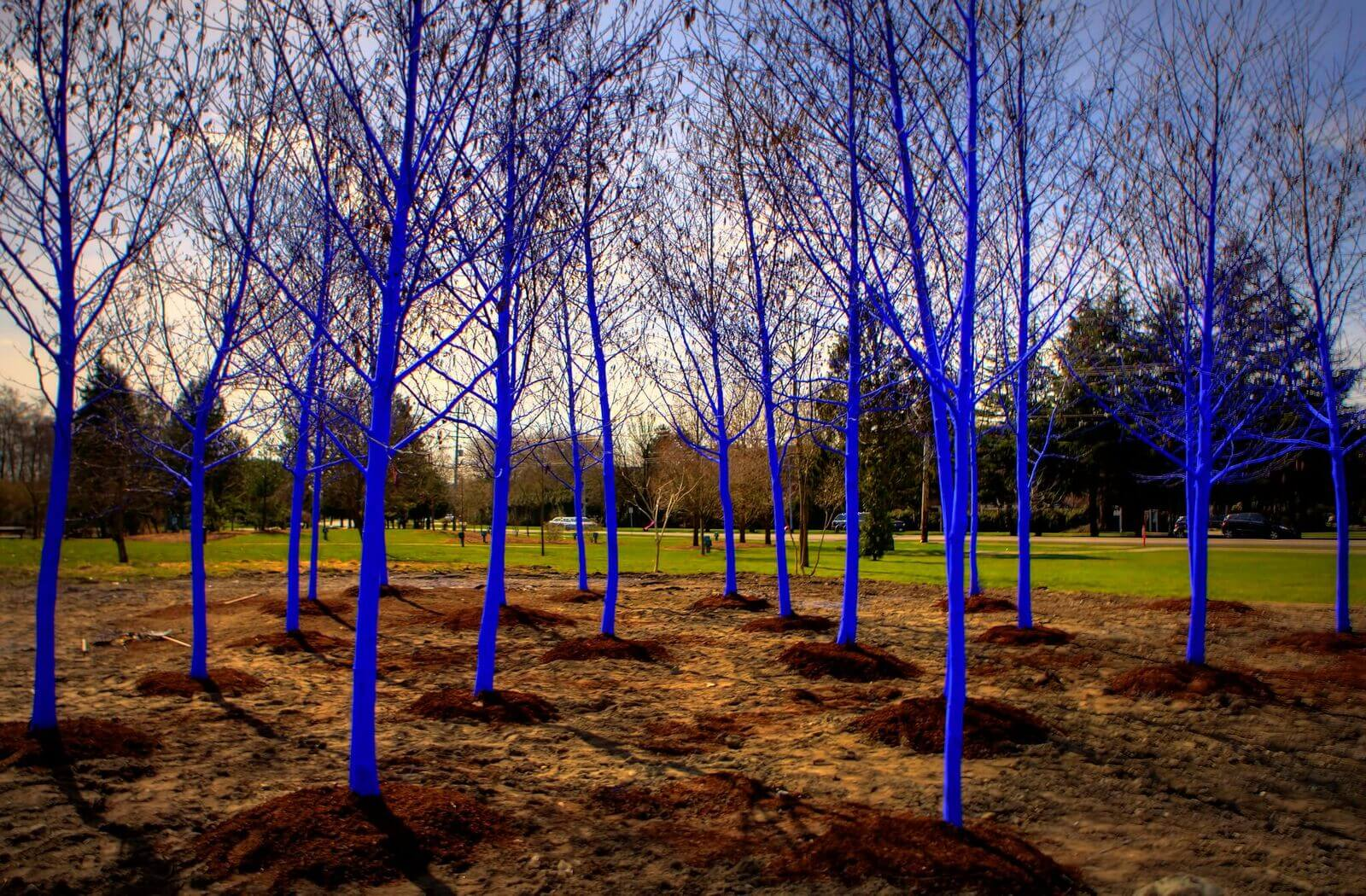 Denver Theatre District Will Feature Blue Trees This April | The Denver Ear