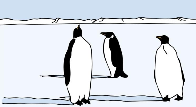 Mr. Popper's Penguins   The Denver Ear