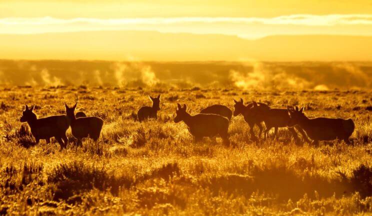 National Wildlife Refuges   The Denver Ear