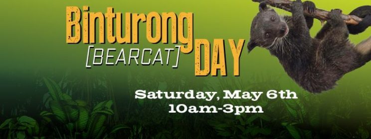 Binturong Day | The Denver Ear