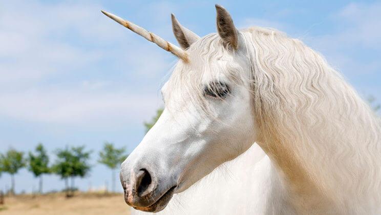 Unicorn Festival | The Denver Ear