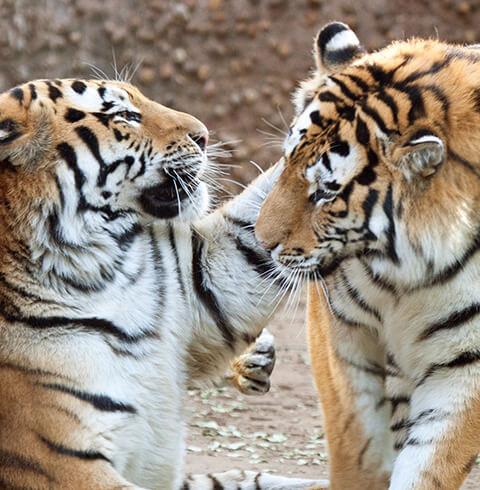 Denver Zoo | The Denver Ear