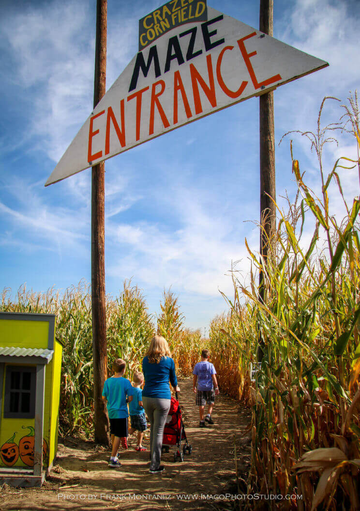 Maize in the City | The Denver Ear
