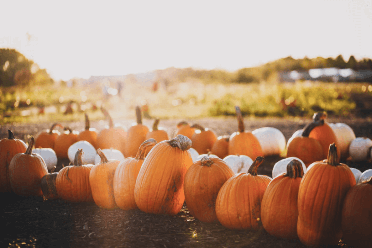 Pumpkin Patch | The Denver Ear