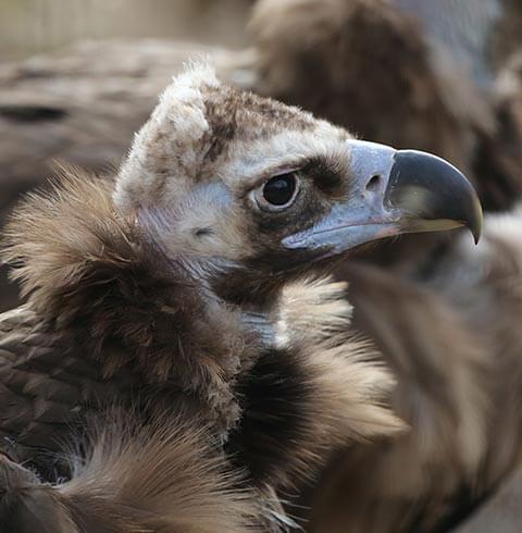 Denver Zoo   The Denver Ear