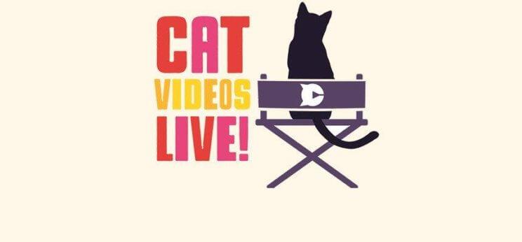Cat Videos Live!   The Denver Ear