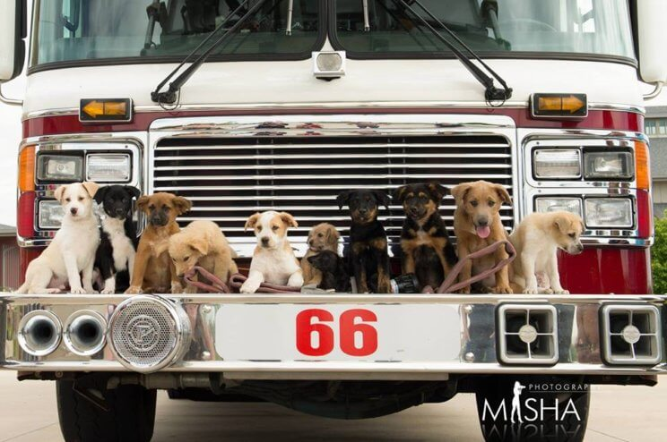 Fire Dog Rescue Calendar | The Denver Ear