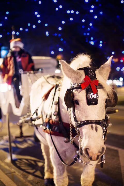 Carriages of Colorado   The Denver Ear