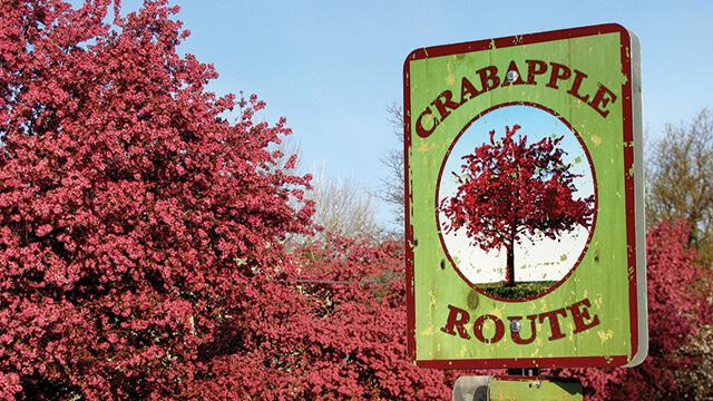 Littleton Crabapple Route | The Denver Ear