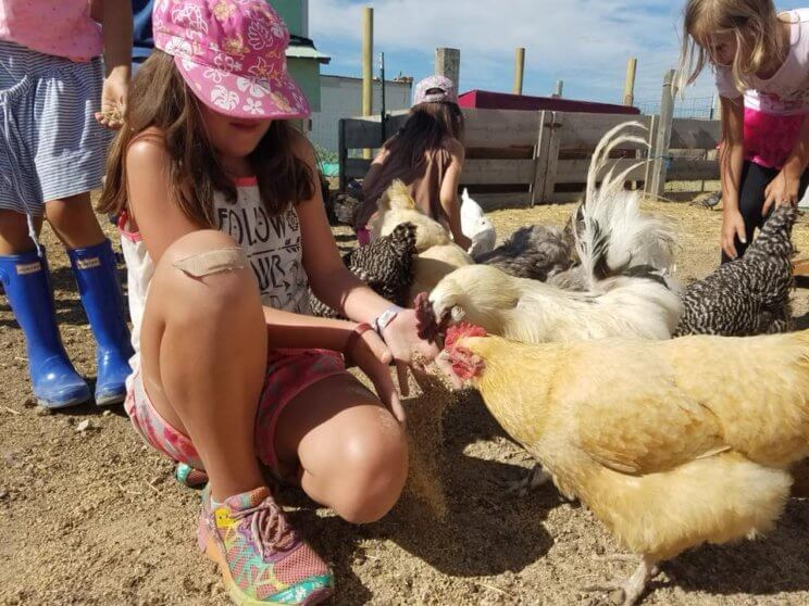 The Urban Farm At Stapleton | The Denver Ear