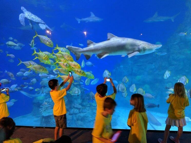 Downtown Aquarium Denver   The Denver Ear